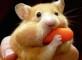 питание рукодельного хомяка
